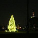 lighted-tree