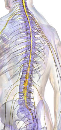 Spinal Cord Tumors in Children Treatment Options